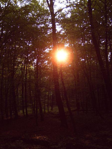 """Aufstehen gegen Gewalt – """"Die Sonne"""""""