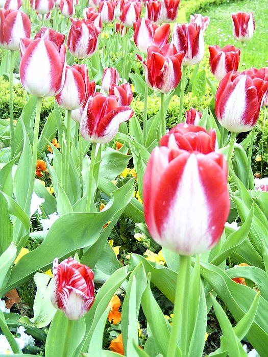 Metabotschaft im Frühling – Springtime!